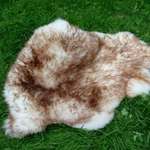decorative mouflon sheep-skins